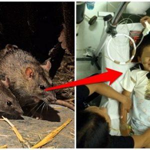 Penyakit yang Disebabkan Oleh Tikus dan Bisa Menular